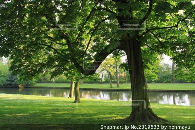 緑豊かなブルージュの木漏れ日の公園の写真・画像素材[2319633]