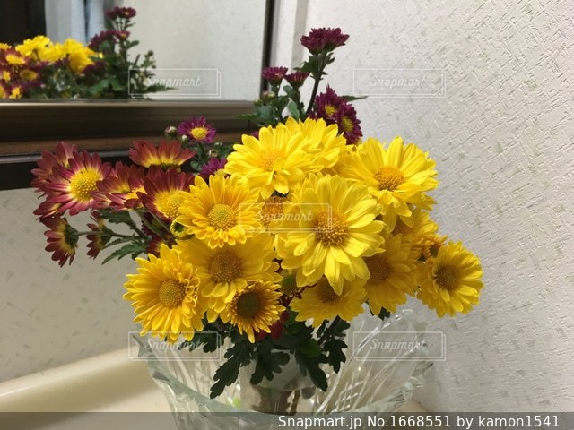 黄色い菊の花で飾られたガラス花瓶の写真・画像素材[1668551]