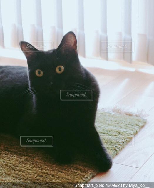 窓の前に座っている猫の写真・画像素材[4209920]