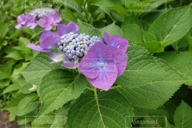 花の写真・画像素材[121846]
