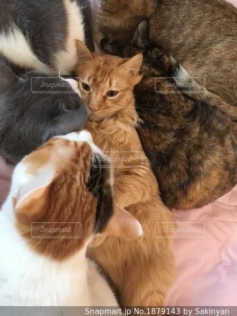 みんなで仲良くくっつく猫たちの写真・画像素材[1879143]