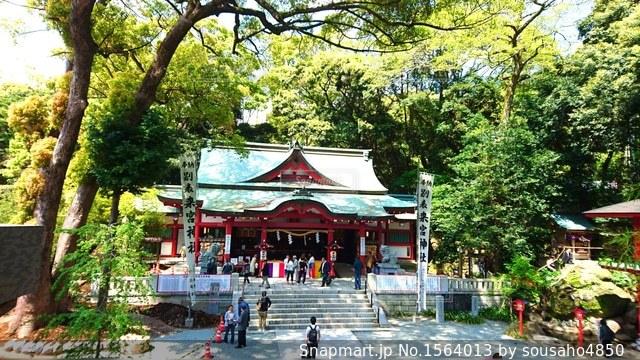 熱海の来宮神社の写真・画像素材[1564013]