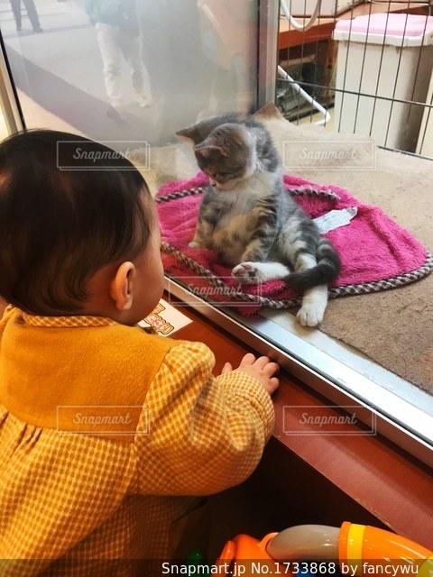 猫を見る小さな子供の写真・画像素材[1733868]