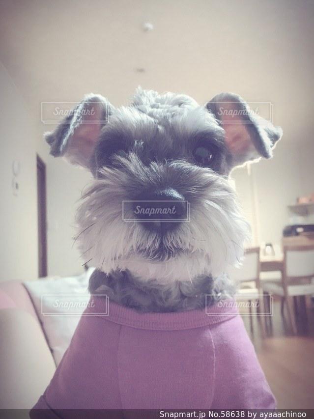 犬の写真・画像素材[58638]