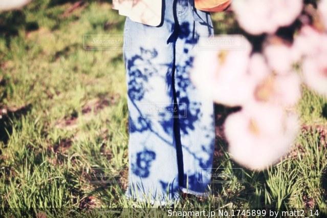 桜の影の写真・画像素材[1745899]