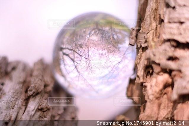 水晶に写る桜の写真・画像素材[1745901]