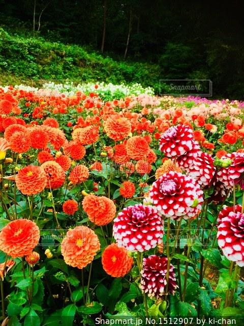 色彩豊かな自然の写真・画像素材[1512907]