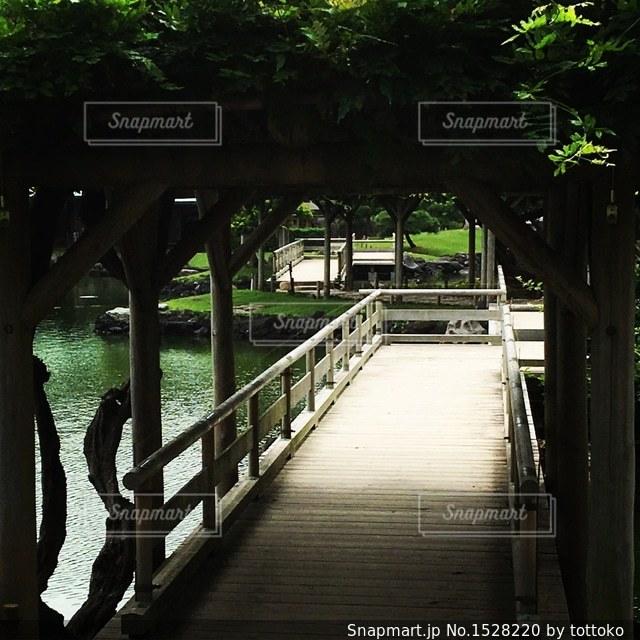 夏の藤棚の写真・画像素材[1528220]