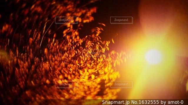 Flashの写真・画像素材[1632555]