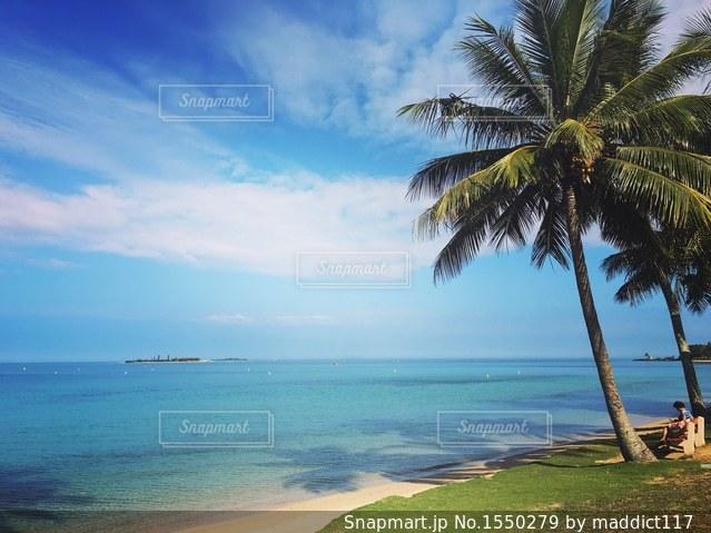 Palmtreesの写真・画像素材[1550279]