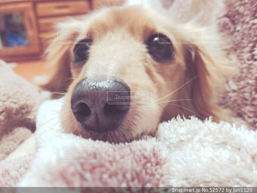 犬の写真・画像素材[52572]