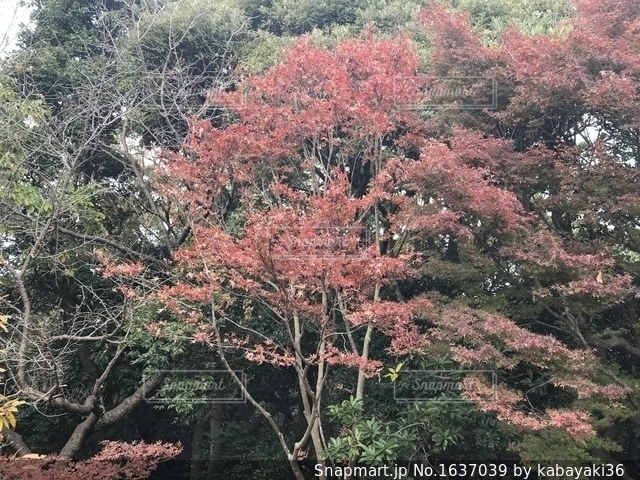 源氏山公園の写真・画像素材[1637039]