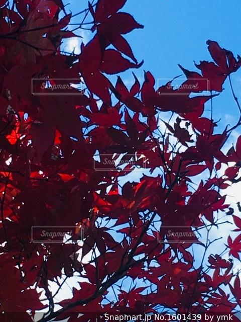 秋の空の写真・画像素材[1601439]