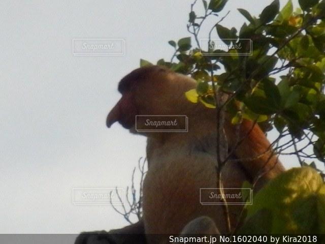 枝の上に座って猿の写真・画像素材[1602040]