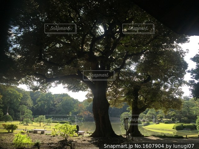 湖のほとりの大樹の写真・画像素材[1607904]