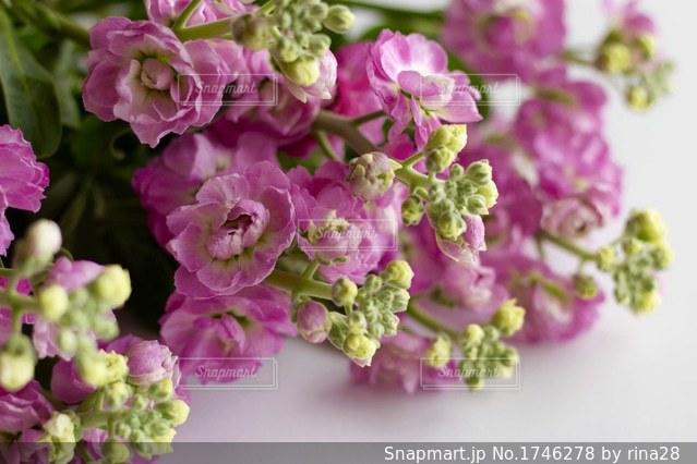 近くの花のアップの写真・画像素材[1746278]