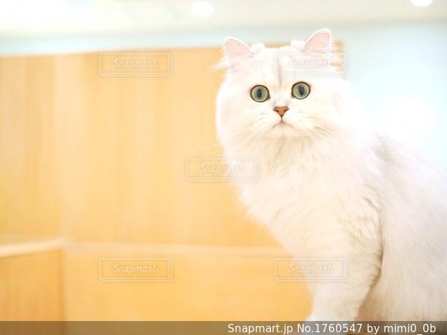 猫の写真・画像素材[1760547]
