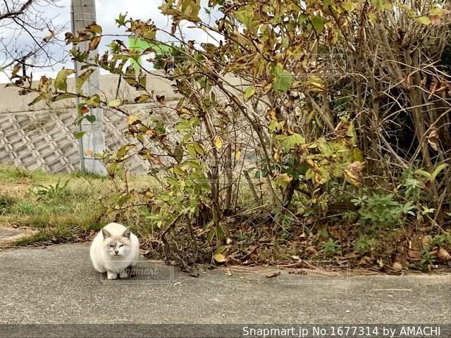 さんぽ道にて猫ちゃん発見の写真・画像素材[1677314]