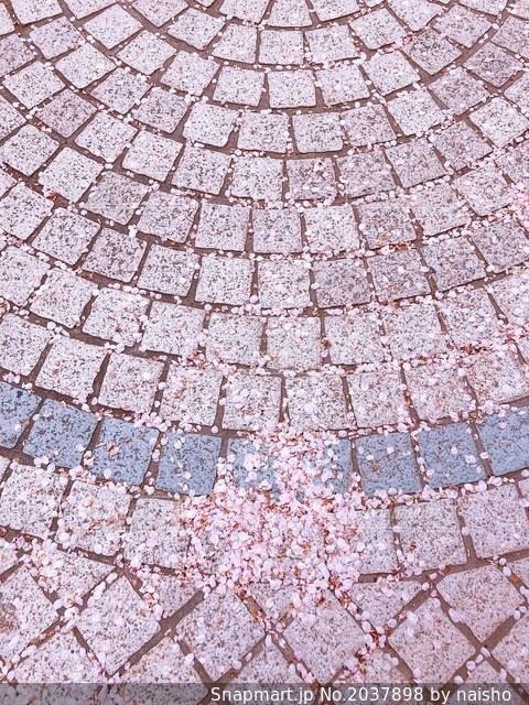 桜散るの写真・画像素材[2037898]