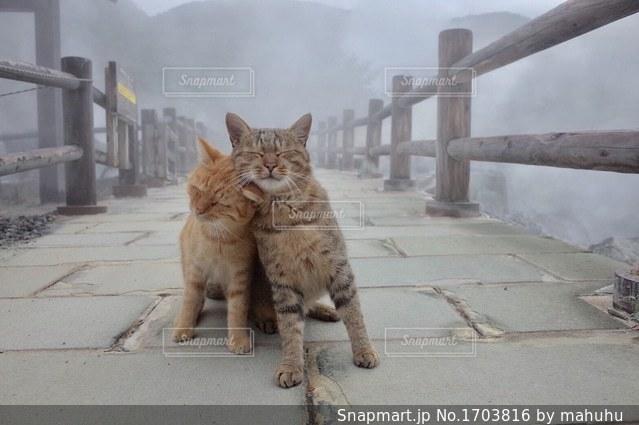 猫2匹の写真・画像素材[1703816]