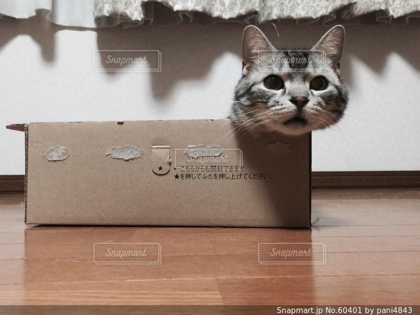 猫の写真・画像素材[60401]