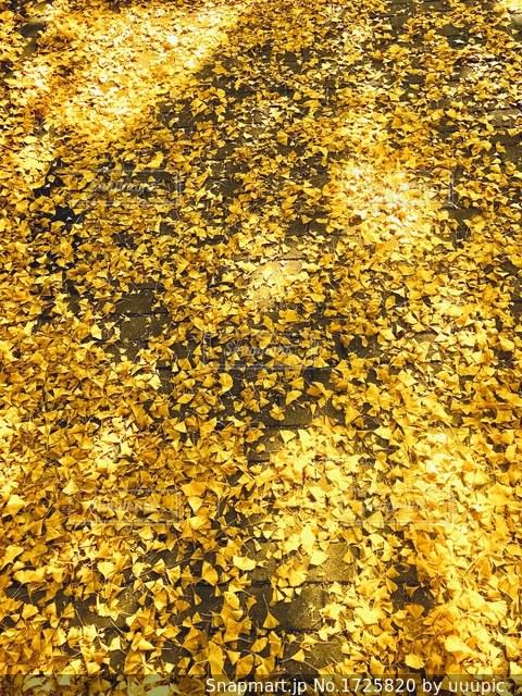 黄色い絨毯の写真・画像素材[1725820]