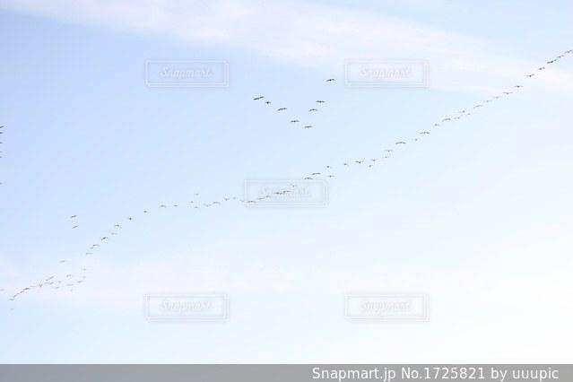空を飛んでいる鳥の群れの写真・画像素材[1725821]