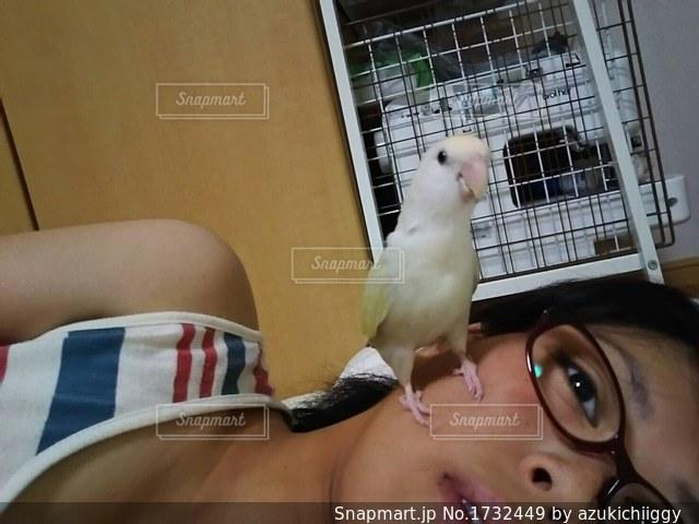 ケージの上に座っている小さな鳥の写真・画像素材[1732449]