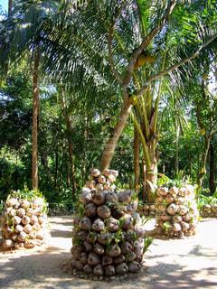風景,公園,屋外,緑,南国,マンゴー,景色,観光,果物,樹木,旅行,果実,地面,バカンス,海外旅行,ガーデン