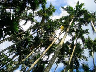 自然,風景,空,屋外,緑,南国,景色,観光,樹木,旅行,ヤシの木,バカンス,海外旅行,草木,パーム,海南島,背の高い木