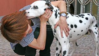 犬と女性の写真・画像素材[2013547]