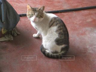 警戒する猫3の写真・画像素材[2330775]