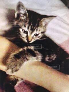 ベッドに横たわる猫5の写真・画像素材[2331749]