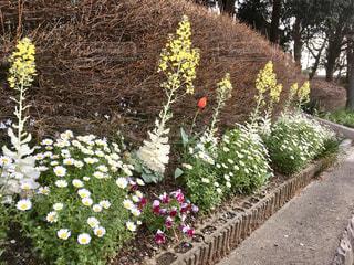 花園のクローズアップの写真・画像素材[3072190]