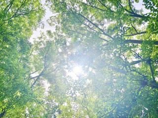 木漏れ日の写真・画像素材[4416590]