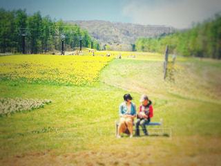 10代,自然,空,花,屋外,植物,黄色,山,女,女子,鮮やか,女の子,ぼかし,観光,人物,人,旅行,ゲレンデ,イエロー,スキー場,色,黄,多彩,無料スポット