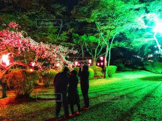 10代,自然,公園,花,桜,屋外,花見,夜桜,女子,男子,草,樹木,お花見,人物