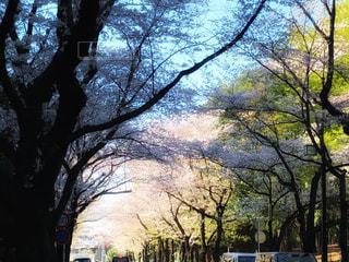 並木通りの写真・画像素材[1832638]