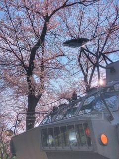 桜と戦車の写真・画像素材[1885125]