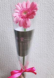 ピンクの花の写真・画像素材[1886048]