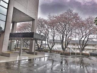 春の入校式に桜と雪景色の写真・画像素材[2004073]