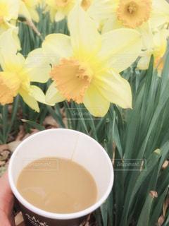 女性,カフェ,公園,花,屋外,黄色,手,指,水仙,スイセン,お出かけ,緑色,インスタ映え,ミルクティー色