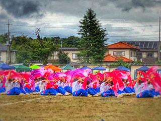 自然,風景,ピンク,緑,女子,男子,人物,人,Tシャツ,学校,曇り空,中学生,校庭,運動会,体育祭,グランド,多彩,ジャージ,団体競技,学校行事,多色,学校生活,ふろしき,マスゲーム