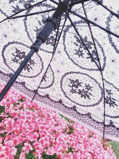 ピンクの花と傘コラボの写真・画像素材[2181035]