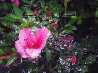 雨の日にの写真・画像素材[2181040]