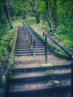 階段の写真・画像素材[2182921]