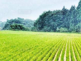 新緑の季節と雨の写真・画像素材[2205511]
