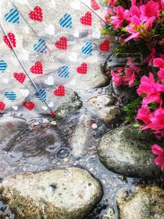 風景,花,傘,屋外,植物,水たまり,景色,ハート,水玉,水溜り,石,ツツジ,ストライプ,日中,つつじ,かさ,カサ,縞模様,玄関口