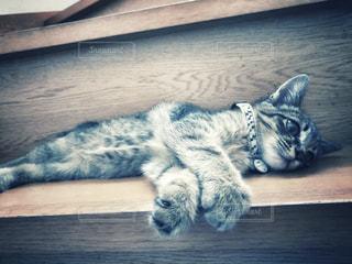 愛猫の写真・画像素材[2315513]