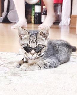 子猫の写真・画像素材[2322588]